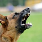 aboiement du chien